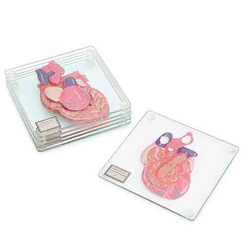 6 stained glass coasters featuring the human heart dissected